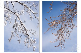 spring trees covered in snow - fine art photography by Kimberly Nelson